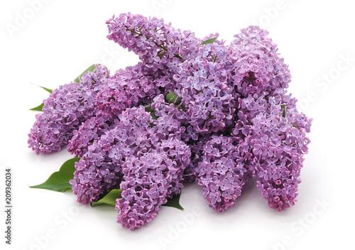 Fotobehang Lilac Blossoms of purple lilac.
