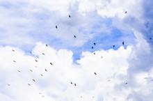 Flying Birds On Cloudy Sky