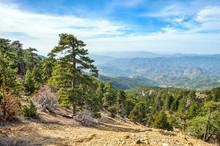 Mountain Forest Landscape, Tro...