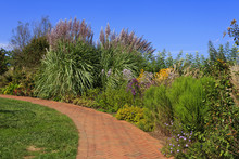 Brick Pavers Walkway With Pampas And Ornamental Grasses