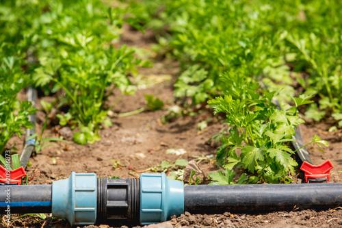 Fotografía  Drip irrigation systems, faucet, tube, coupling, to the farmer's garden