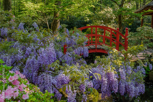 Wall Murals Khaki Beautiful Red bridge in Japanese Garden in Clingendael, The Hague, Netherlands