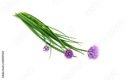 Fresh green chives, garden herbs, with their purple flowers Isolated against a white background Canvas Print