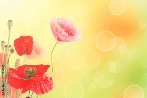 Fotobehang Bloemen Abstract natural summer or spring floral background with bunch of red and pink poppy flowers with copy space