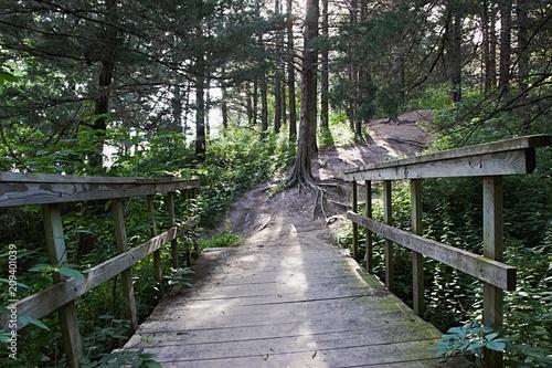 Foto op Canvas Weg in bos Old wood bridge on wooded trail in Omaha, NE