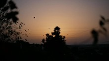 Beautiful Sunset With Trees And Birds