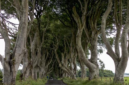 Keuken foto achterwand Noord Europa Dark Hedges, Ballymoney, Northern Ireland