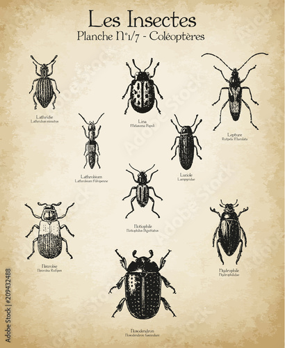 Photographie Gravures anciennes insectes N°1/7