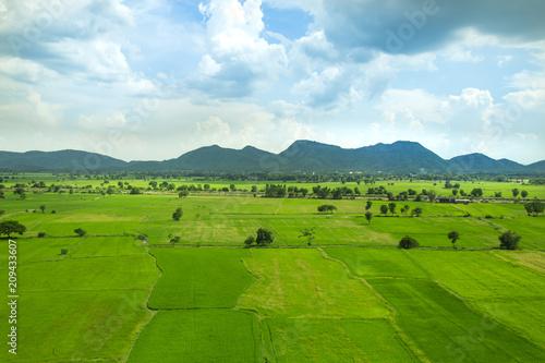 Fotobehang Rijstvelden Green seedlings and rice fields isolated on white background.