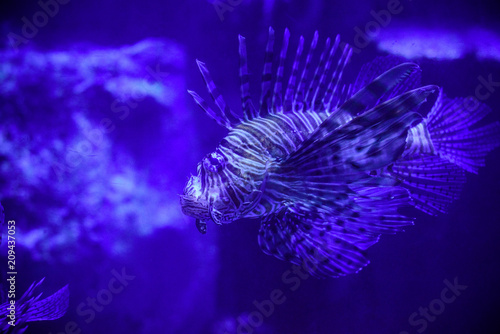 Foto op Plexiglas Violet Beautiful Sea World. Sea fish at depth. Underwater world with corals and tropical fish. Underwater scene. Underwater world. Underwater life landscape.
