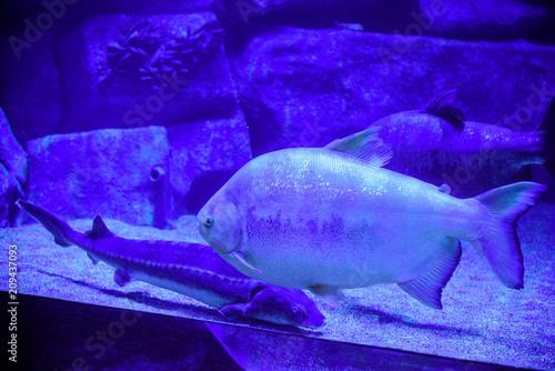 Spoed Foto op Canvas Violet Beautiful Sea World. Sea fish at depth. Underwater world with corals and tropical fish. Underwater scene. Underwater world. Underwater life landscape.