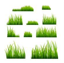 Green Grass Vector Illustratio...