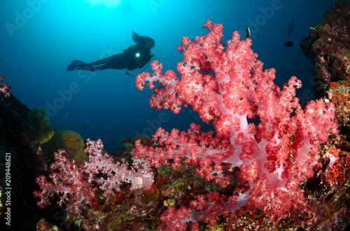 Photo Stands Coral reefs Underwater model