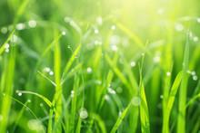 Beautiful Nature Green Grass W...