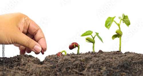 Farmer hand seed planting with seed germination sequence Canvas