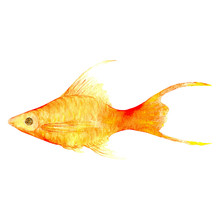 Tropical Fish On A White Background.Watercolor Painting. Handmade Drawing. It Can Be Used For Postcards, Invitations, Menus, Flyers,gifts Ets.