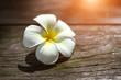 Beautiful white Plumeria
