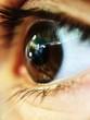Beautiful photo of brown eyes with eyelashes close up