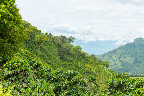Fotomural Beautiful coffee plantation in Jerico, Colombia in the state of Antioquia
