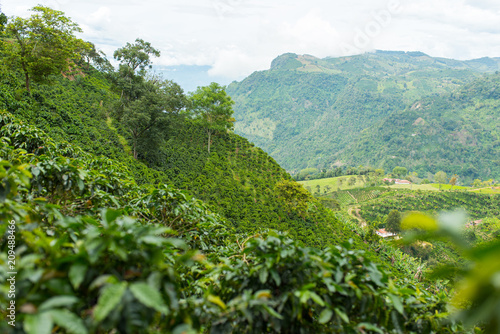 Fotografía Beautiful coffee plantation in Jerico, Colombia in the state of Antioquia