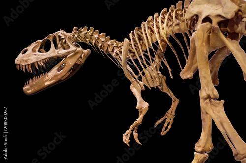 Naklejka premium Szkielet dinozaura na czarnym tle