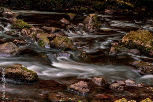 Aluminium Prints Forest river A fast flowing river