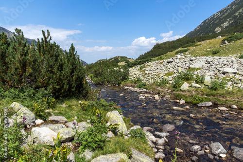 Fotobehang Olijf Amazing Landscape Banderishki Chukar Peak, Pirin Mountain, Bulgaria