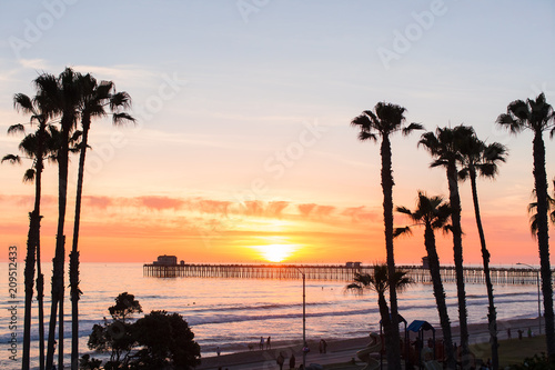 Photo Palm Trees Beach Waves and Surf in Oceanside San Diego California