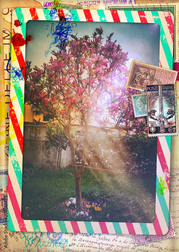 Poster Imagination Vintage Italian post airmail postcard with Magnolia tree