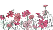Hand Drawn Pink Cosmos Flowers...