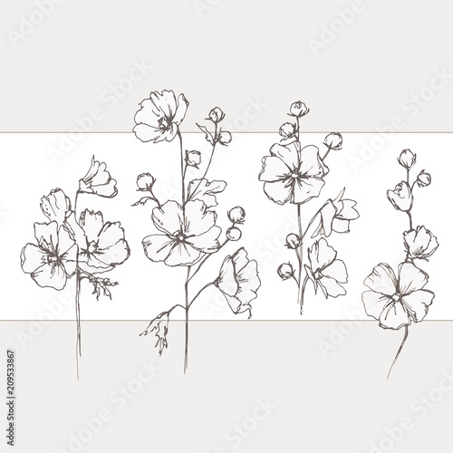 Fototapeta Malva sylvestris. Wild pink mallow. Wildflowers. Flowering in summer, medicinal plants.  obraz