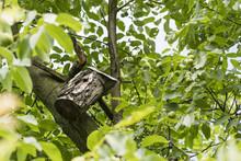 Bird Booth On Walnut Stem.