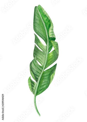 Fototapeta Set of Tropical banana green leaves watercolor illustration obraz na płótnie