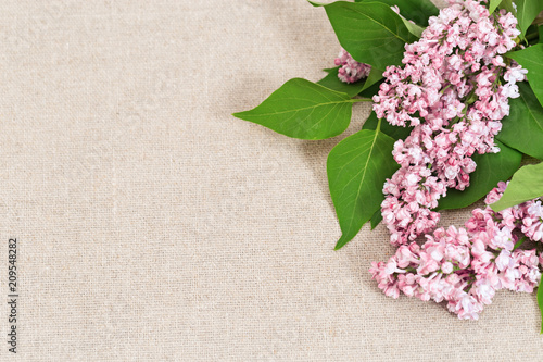 Keuken foto achterwand Lilac Blooming lilac close up on natural material. Flowery background with copy space.