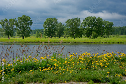 Tuinposter Blauwe jeans Russia. The South Of Western Siberia. Blooming dandelions on the lake