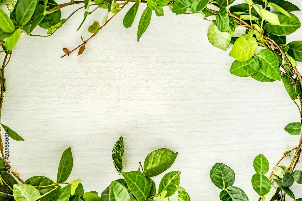 Fototapety, obrazy: 植物のフレーム