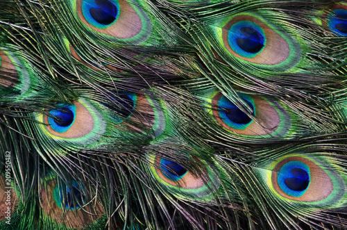 Foto op Aluminium Pauw tail peacock texture
