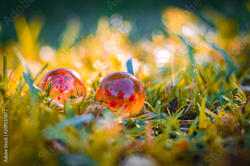 Photo  dragon balls on the grass