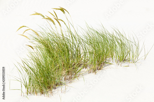 Photo sur Toile Herbe Tuft Of Grass In White Sand