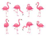 Fototapeta Fototapety na ścianę do pokoju dziecięcego - Exotic pink flamingos birds. Flamingo with rose feathers stand on one leg. Rosy plumage flam bird cartoon vector illustration
