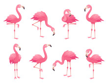 Exotic Pink Flamingos Birds. F...