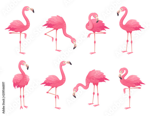 Photo Exotic pink flamingos birds