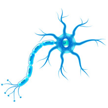 Nerve Cells Isolated On White ...