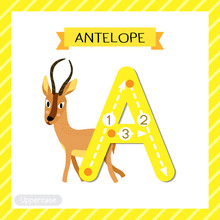 Letter A Uppercase Cute Children Colorful Zoo And Animals ABC Alphabet Tracing Flashcard Of Antelope For Kids Learning English Vocabulary And Handwriting Vector Illustration.
