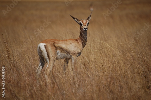 Foto op Plexiglas Antilope Ethiopie - Arba Minch