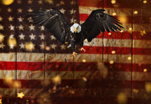 Bald Eagle Flying With America...