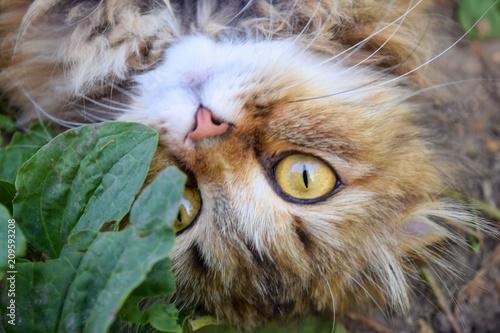 Keuken foto achterwand Kat Cat with big eyes