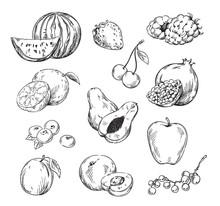 Vector Drawing Of Various Fruits