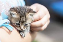 A Very Small Kitten Of Dark Co...