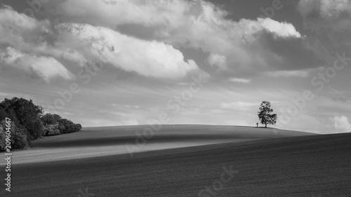 Stampa su Tela Black and white landscape with alone birch on the horizon